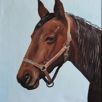 48 - Testa di cavallo